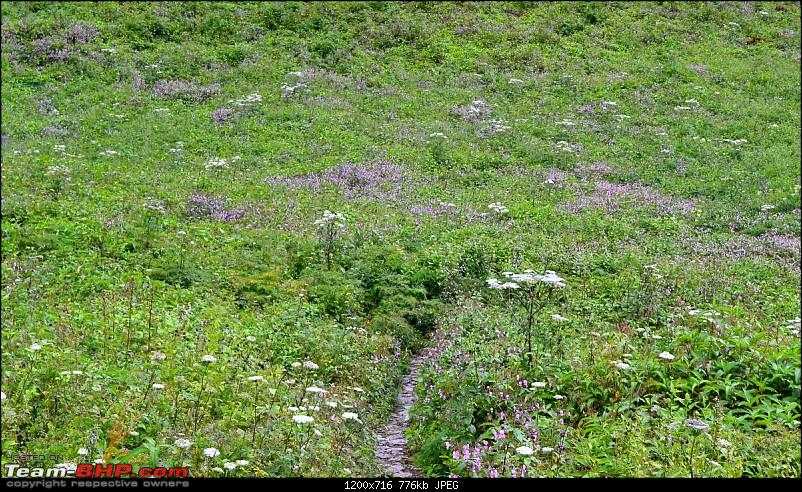 "Fauji's Drivologues - Valley of Flowers, Uttarakhand - ""Paradise on Earth""-dsc_0254001.jpg"