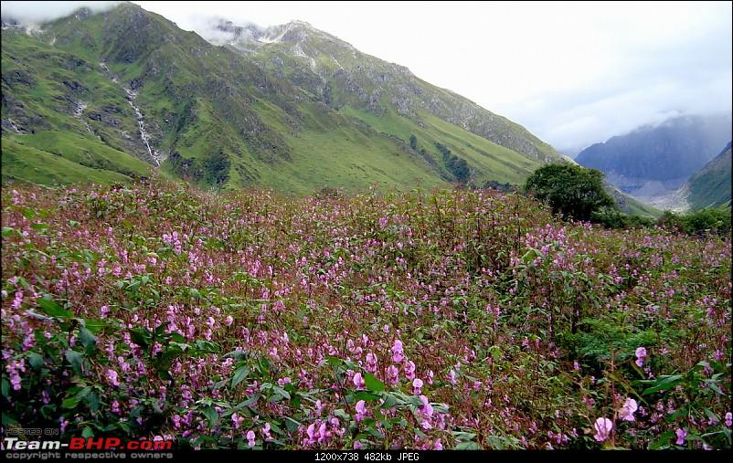 "Fauji's Drivologues - Valley of Flowers, Uttarakhand - ""Paradise on Earth""-dsc03589.jpg"