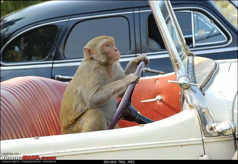 Pics: Vintage & Classic cars in India-13620712_1236686056375890_8015265553841828402_n.jpg